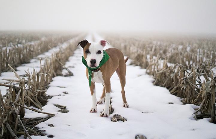 Stretch the dog in a snowy field