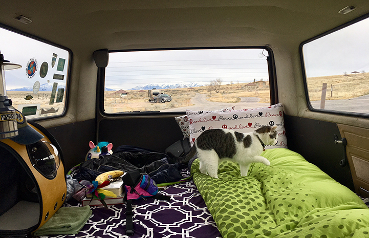 Buddha the cat in the back of a vehicle on a road trip