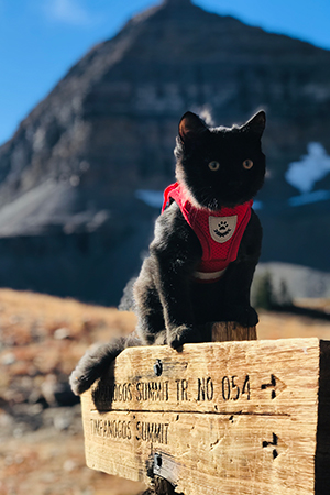 A harnessed Rafa the kitten with mountains in the background