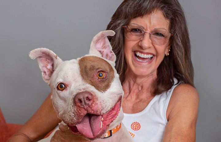 Brown and white pit bull terrier dog sitting next to a smiling woman