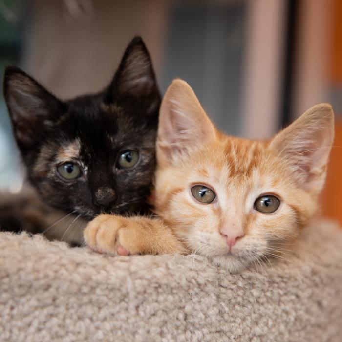 A black kitten and an orange kitten relaxing on a pet bed