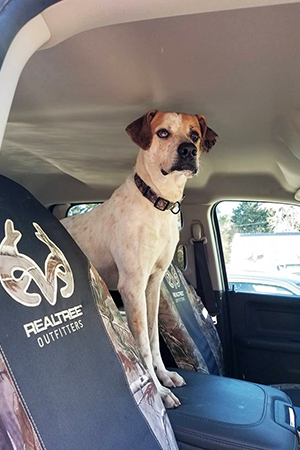 Henry is a great dog who loves car rides, snuggles and long walks in the woods