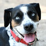 Princess the dog available for adoption from Atlanta