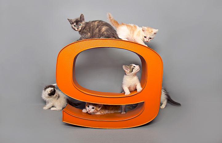 Multiple kittens climbing on and around an orange number nine