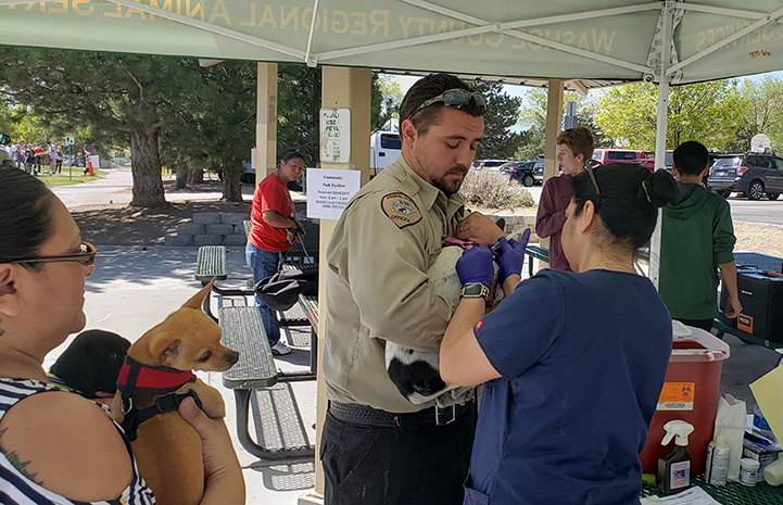 A pair of people holding and microchipping a small dog while another woman holds a dog waiting in line to be next
