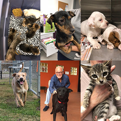 Collage of photos of animals from Harris County Animal Shelter