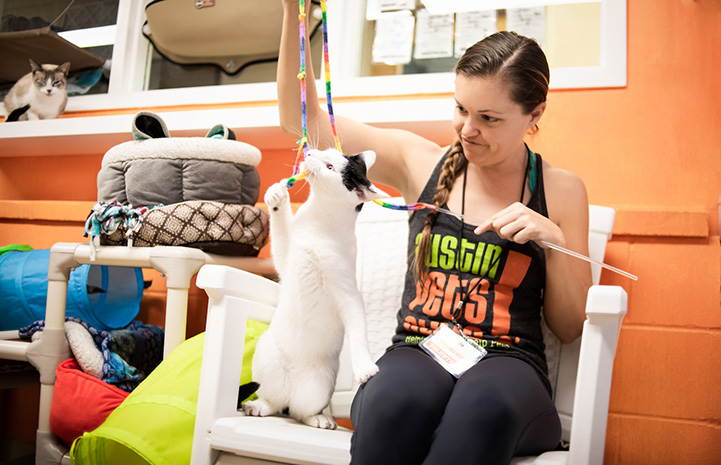 Woman wearing an Austin Pets Alive! shirt playing with a wand toy with a white and black cat