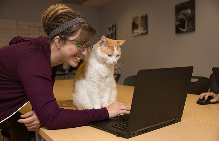 Woman and cat looking at a laptop computer