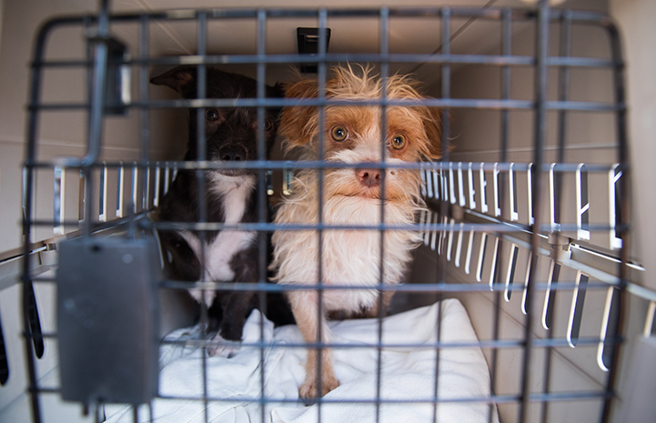Two dogs in a carrier for a transport