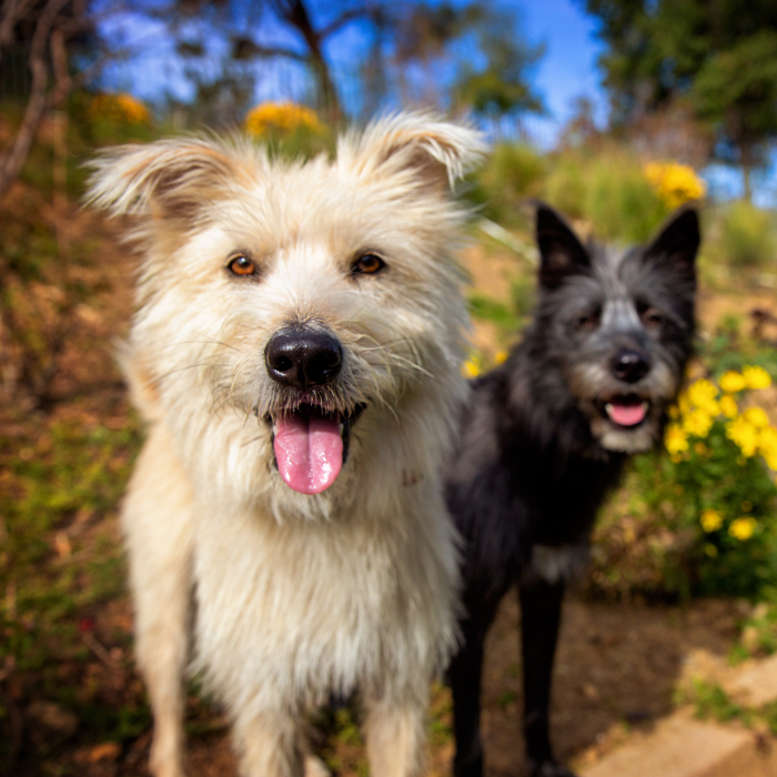 Scruffy dogs