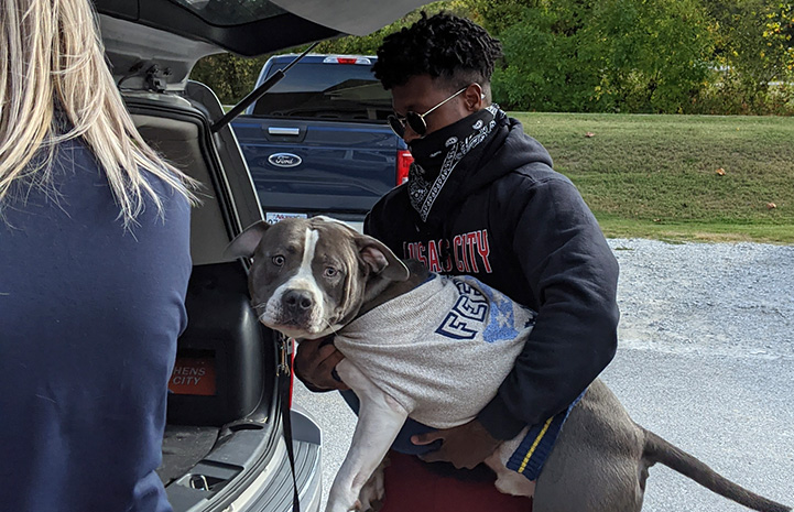 Man putting a gray and white pit-bull-type dog wearing a shirt into the back of a car