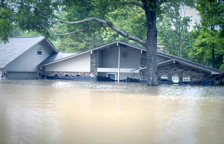 Flooded house in Arkansas with water halfway up the front door