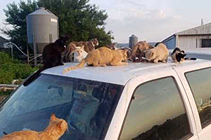 A group of many cats on top of a vehicle