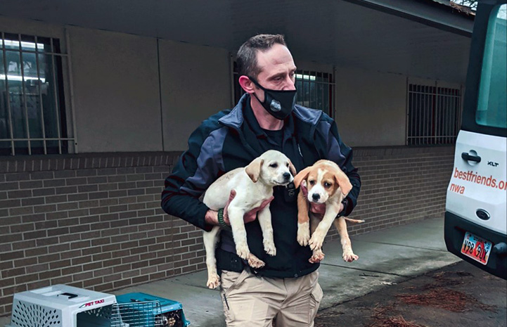 Mask wearing man carrying a pair of puppies, walking toward the back of a truck