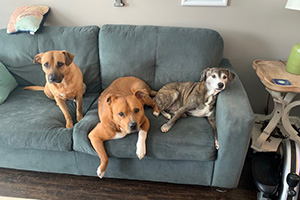 Ann Perkins, Lexi and Seymour the dogs all sitting on the couch together