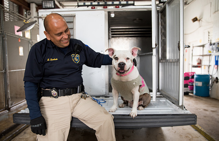Animal control officer sitting on the back of an animal control truck with a pit-bull-type dog