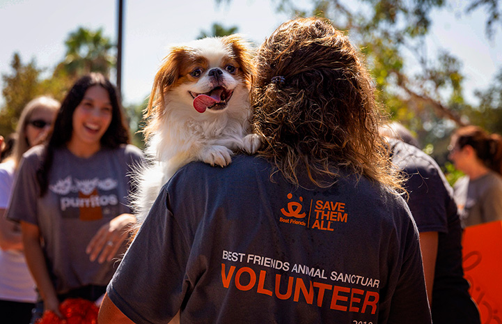 The back of a person wearing a volunteer T-shirt holding a small dog over her shoulder