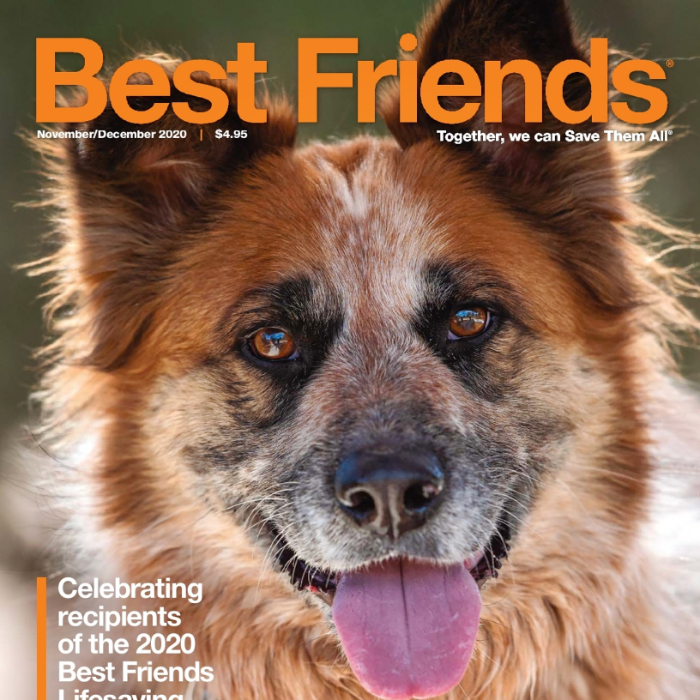 Red heeler dog on cover of Best Friends Magazine