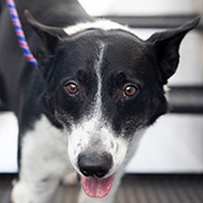 Adopt Bacon Bits the dog available for adoption from Salt Lake City