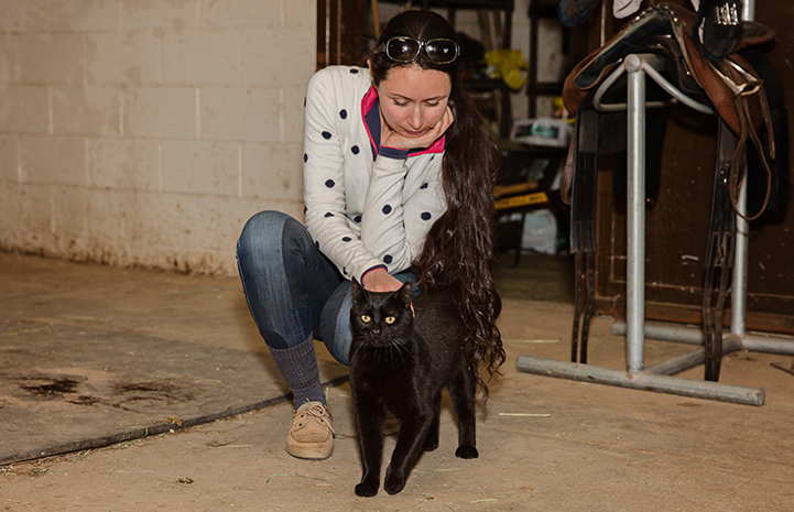 Hansel, a black shorthair cat, being pet by a woman in a barn with a saddle behind them