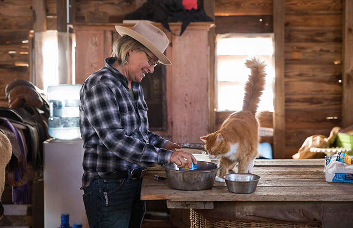 Woman wearing a plaid shirt and hat putting cat food in a stainless steel bowl with an orange and white cat with upright tail looking at the bowl