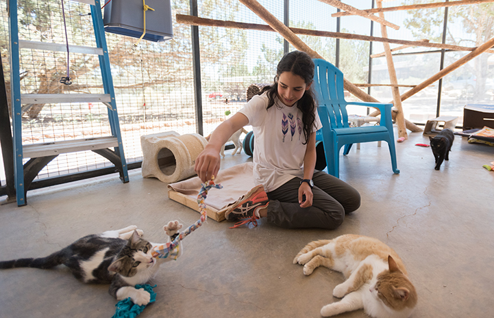 Thirteen-year old volunteer Lily Dick helping socialize cats in Cat World