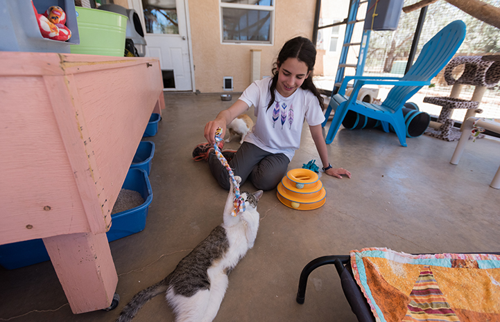 Lily Dick volunteering at Cat World after making a donation from her bat mitzvah