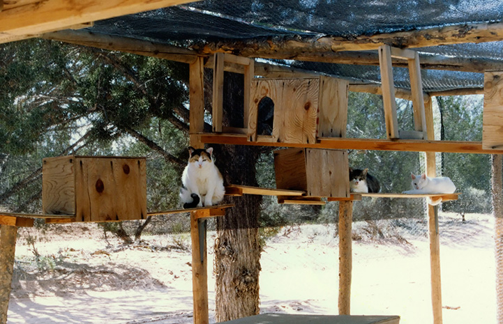 Original outside enclosure at Cat World with some cats on wooden shelves