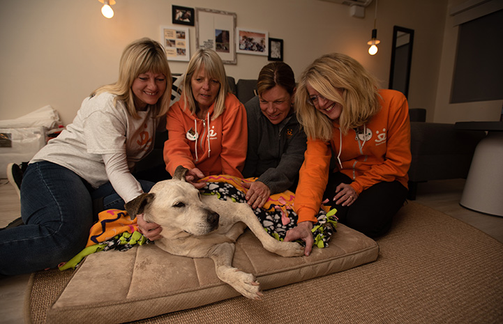 Spice the dog on a sleepover with four women at the Best Friends Roadhouse and Mercantile