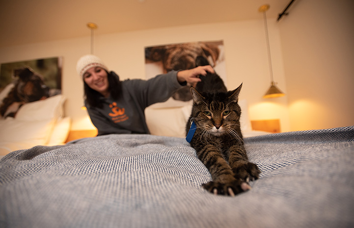 Wilbur the cat stretching while on the bed at the Best Friends Roadhouse and Mercantile during a sleepover