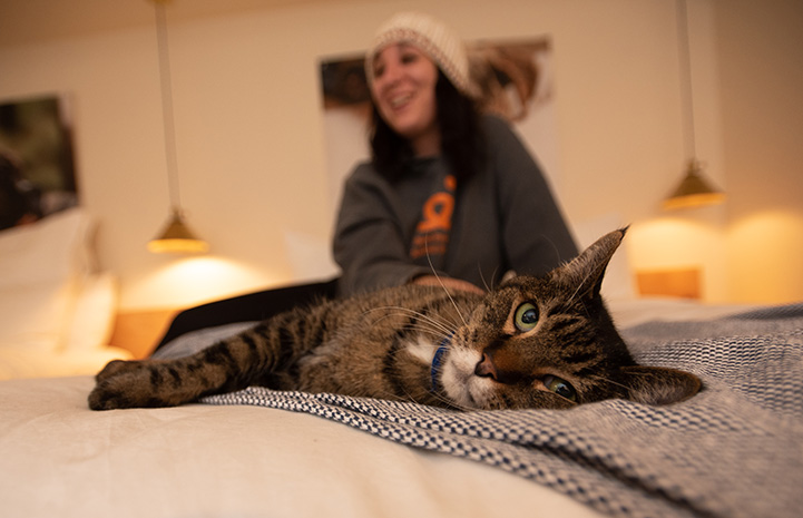 Wilbur the brown tabby cat lying on a bed at the Best Friends Roadhouse and Mercantile