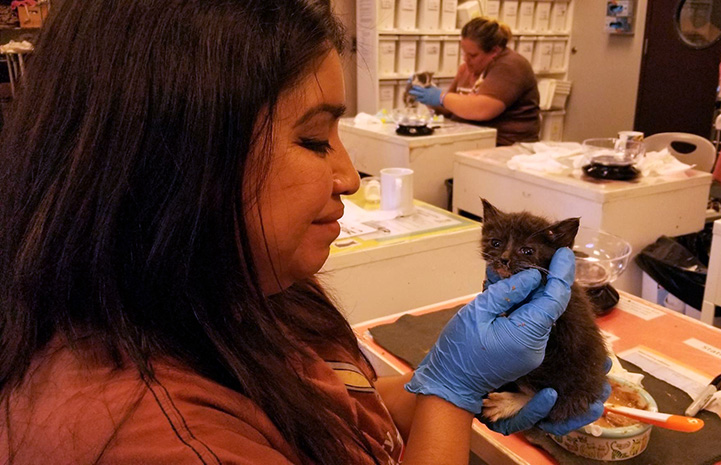 Smiling woman holding a small gray kitten