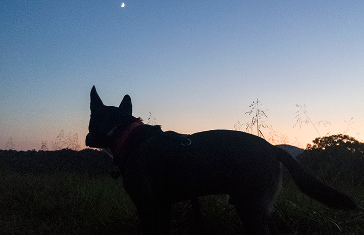 A silhouette of Sam the dog with a sunset or sunrise behind him