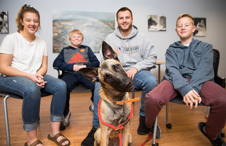 Family adopting Sybil the German shepherd, with her head cocked to the side