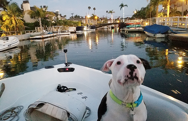 Charger the dog riding on a boat with palm trees in the background
