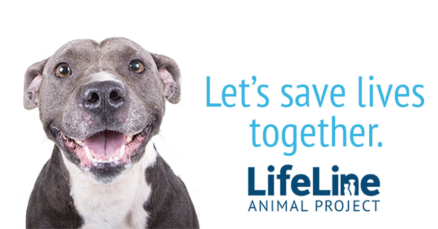 Gray and white pit bull terrier next to the words, Let's save lives together and the Lifeline Animal Project logo