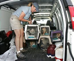 Julie Castle moving crates containing cats in the back of a transport van
