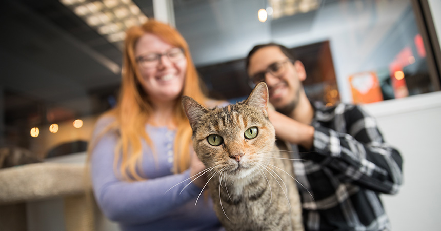 Smiling couple behind a torbie cat