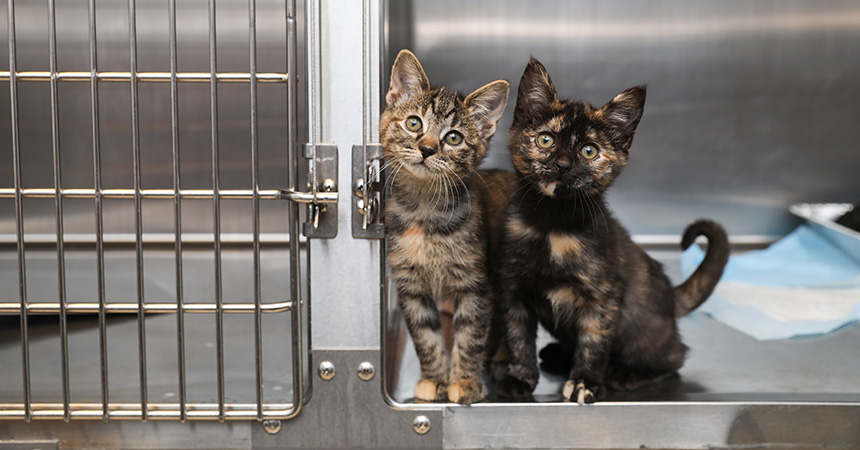 Two kittens sitting in the front of a stainless steel kennel in a shelter
