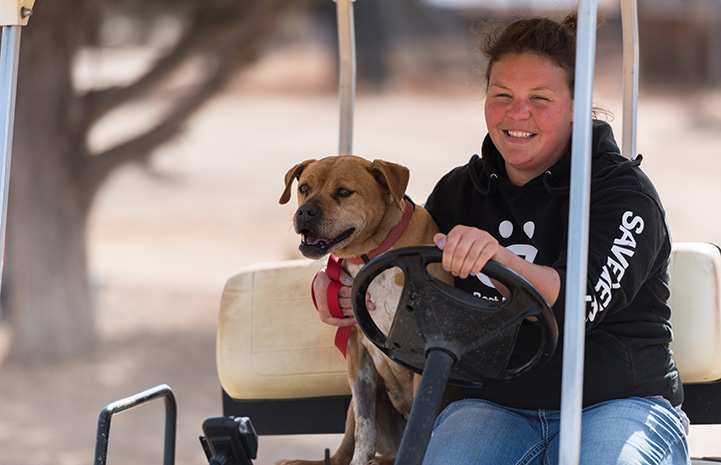 Meryl the Vicktory dog riding in a golf cart
