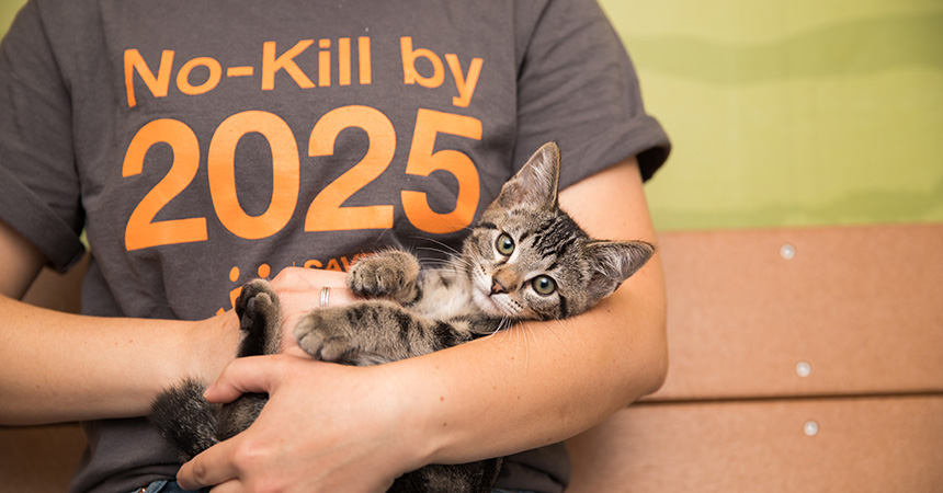 Tabby kitten being cradled by a person wearing a No-Kill by 2025 T-shirt