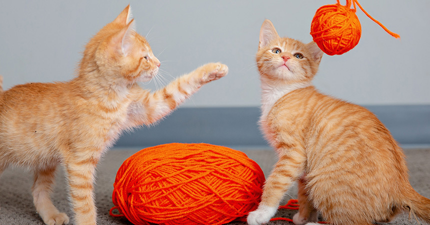Two orange tabby kittens playing with some orange yarn