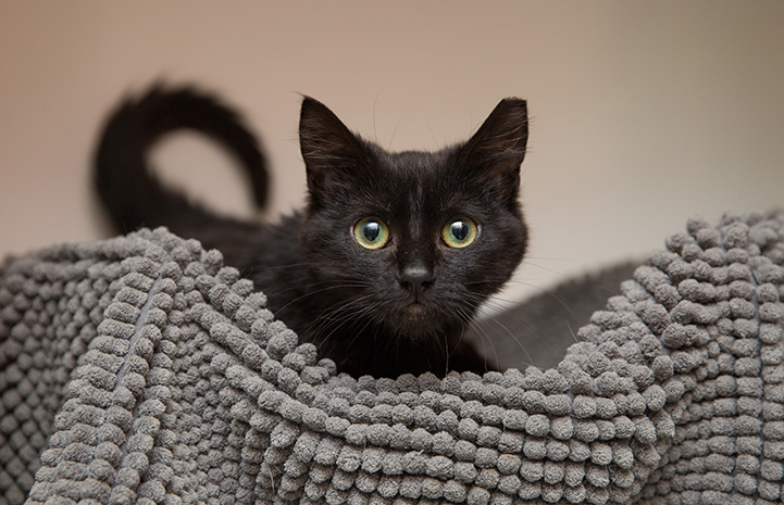 Black cat on a bumpy gray blanket