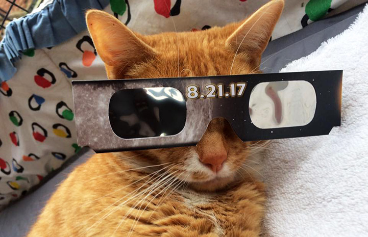 Solarflare the cat wearing eclipse glasses