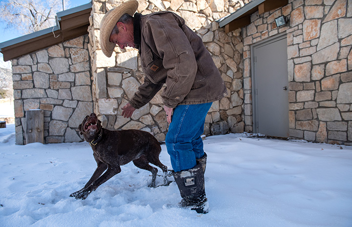 Sasha, the dog saved with the blood transfusion, running outside in the snow next to a man