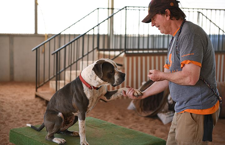Jango the dog is giving his paw to Tom, the Dogtown caregiver