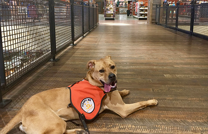 Tyler the energetic dog remained calm around shoppers when Michelle took him out to promote him
