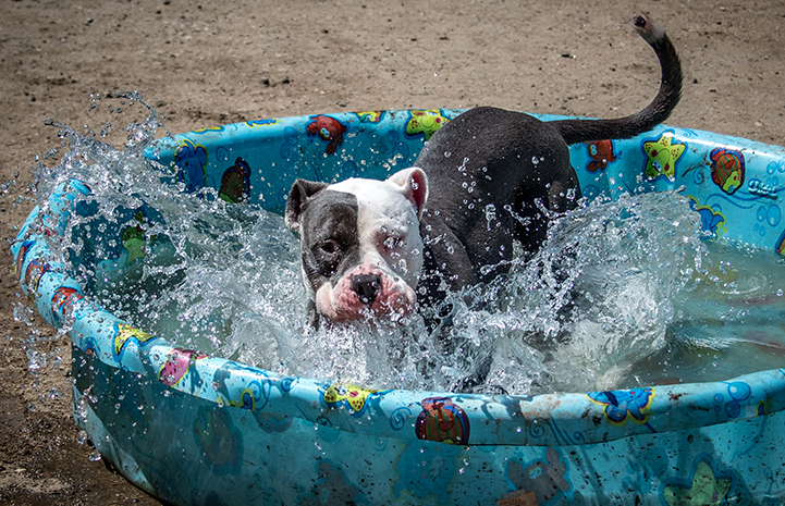 Once Nina the dog had settled in at the center, dips in a kiddie pool turned out to be one of her favorite activities