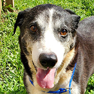 Adopt Booker the dog available for adoption from Lexington