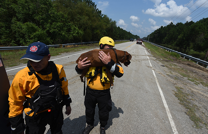 With the dog barely able to walk, rescue team member Ethan Gurney lifted the boxer out of danger